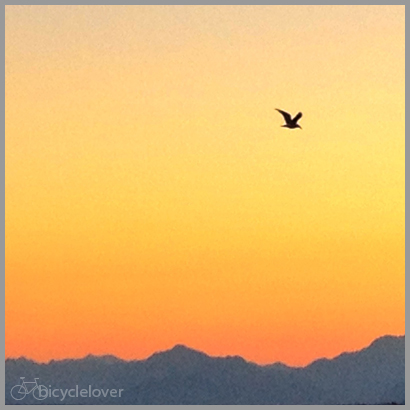 bird and mountains, color